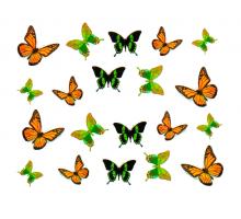 #32 Бабочки